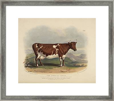 The Glamorgan Breed Framed Print by British Library