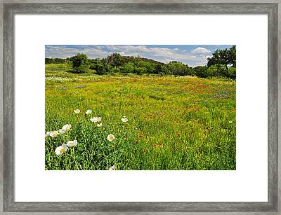 The Glory Of Spring Framed Print by Lynn Bauer