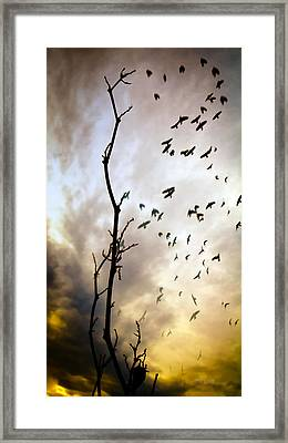 The Gods Laugh When The Winter Crows Fly Framed Print by Bob Orsillo