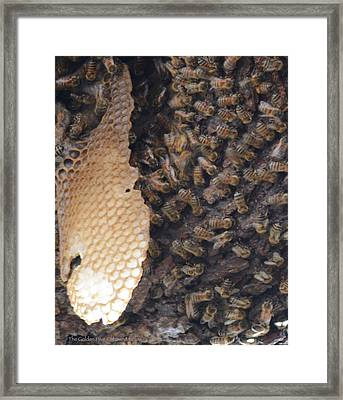 The Golden Hive  Framed Print by Shawn Marlow