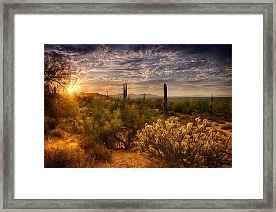 The Golden Southwest  Framed Print by Saija  Lehtonen