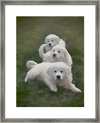 The Great Pyranise Pups  Framed Print by Bonnie Willis