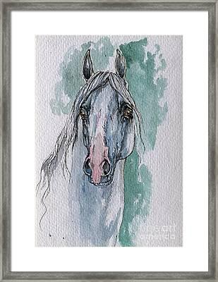 The Grey Arabian Horse 4 Framed Print by Angel  Tarantella