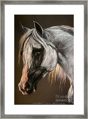 The Grey Arabian Horse Framed Print by Angel  Tarantella