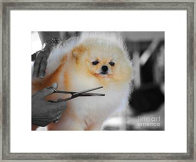 The Groomer Framed Print by Jai Johnson
