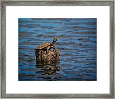 The Happiest Turtle Framed Print by Jai Johnson