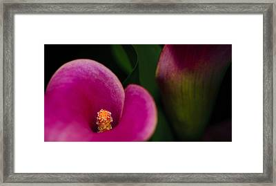 The Heart Of The Lily Framed Print by Christi Kraft