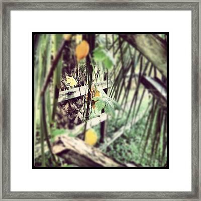 The Hidden Fence Framed Print by Chasity Johnson