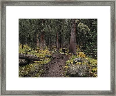 The High Forest Framed Print by Eric Glaser