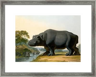 The Hippopotamus, 1804 Framed Print by Samuel Daniell
