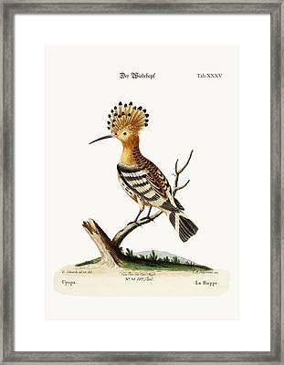 The Hoopoe Framed Print by Splendid Art Prints