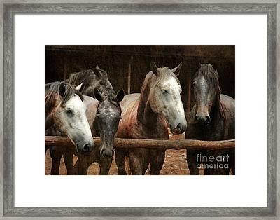 The Horses Framed Print by Angel  Tarantella