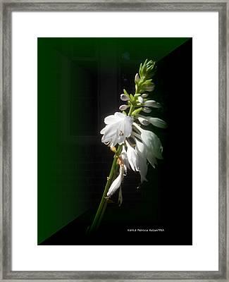 The Hosta Flowers Framed Print by Patricia Keller