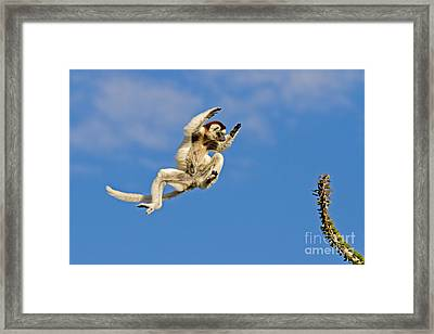 The Importance Of Precision Timing Framed Print by Ashley Vincent