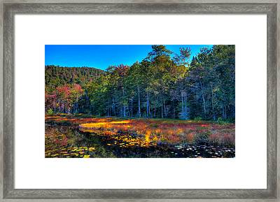 The Inlet To Cary Lake Framed Print by David Patterson