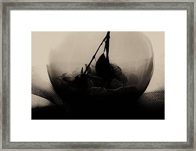 The Inverted Rose Framed Print by Jessica Shelton