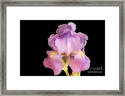The Iris In All Her Glory Framed Print by Andee Design