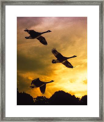The Journey South Framed Print by Bob Orsillo
