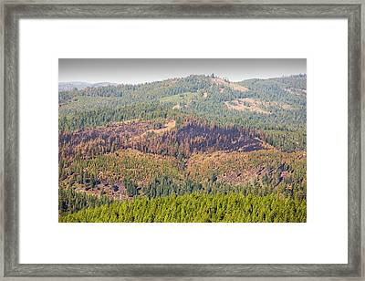The King Fire Framed Print by Ashley Cooper