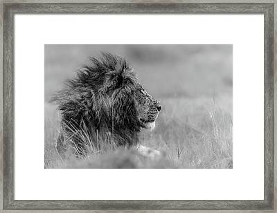 The King Is Alone Framed Print by Massimo Mei