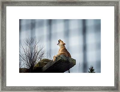 The King Framed Print by Mirra Photography