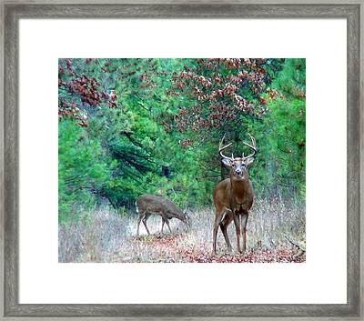 The King Framed Print by Thomas Young