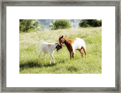 The Kiss Framed Print by Amy Tyler