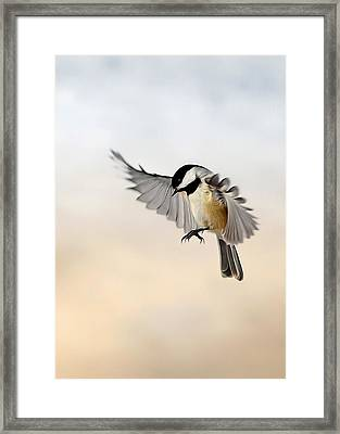 The Landing Framed Print by Bill Wakeley