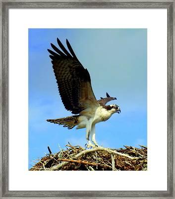 The Landing Framed Print by Karen Wiles