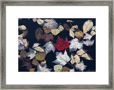The Last Hurrah Framed Print by Juergen Roth