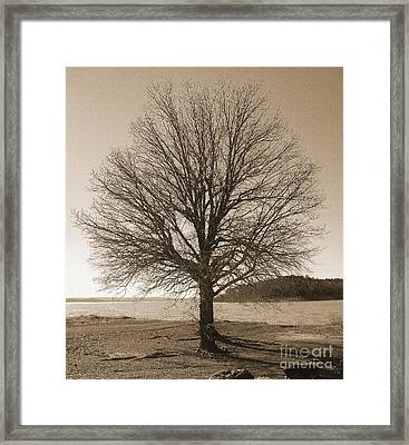 The Last Oak Framed Print by R McLellan