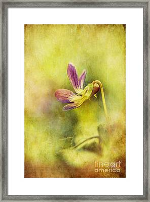 The Last Violet Framed Print by Lois Bryan
