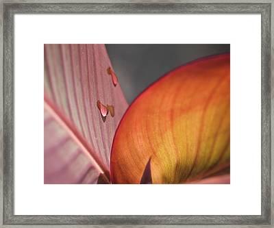 The Leaf No. 4 Framed Print by Richard Cummings
