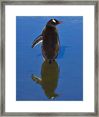The Left Wing Framed Print by Tony Beck