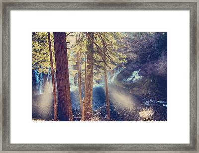 The Light Of My Life Framed Print by Laurie Search