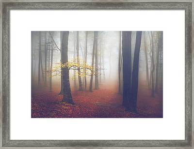 The Light-tree II Framed Print by Toma Bonciu