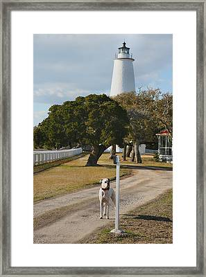 The Lighthouse Guardian Framed Print by Steven Ainsworth
