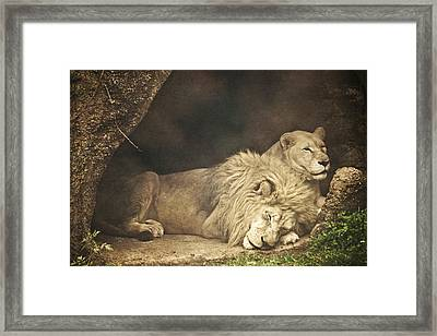 The Lion Sleeps Tonight Framed Print by Trish Tritz