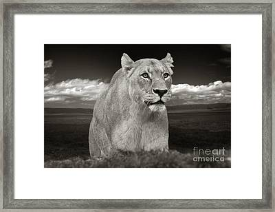 The Lioness Framed Print by Christine Sponchia
