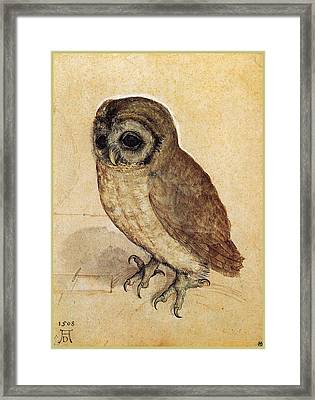 The Little Owl 1508 Framed Print by Philip Ralley