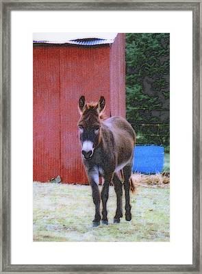 The Lonely Donkey Framed Print by Kay Novy