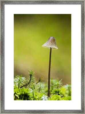 The Lonely Mushroom Framed Print by Mircea Costina Photography