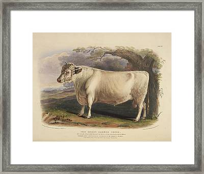 The Long Horned Breed Framed Print by British Library