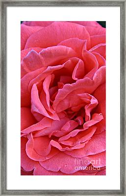The Long Pink One Framed Print by Clare Bevan