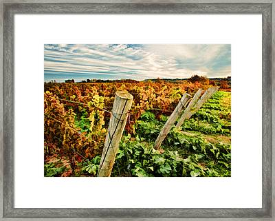 The Look Of Fall In The Vineyard Sky Framed Print by Elaine Plesser