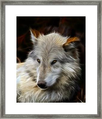 The Look Framed Print by Steve McKinzie