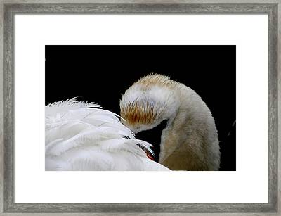 The Look Framed Print by Terry Cosgrave