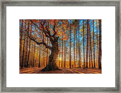 The Lord Of The Trees Framed Print by Evgeni Dinev
