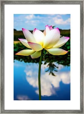 The Lotus Blossom Framed Print by Jon Woodhams