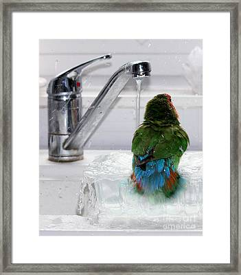 The Lovebird's Shower Framed Print by Terri Waters